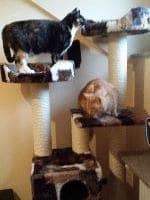 Timba, Blacky und Fluffy