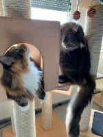 Holly & Smokey