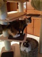 Lilo, Narmi und Lucy