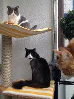 Leonie,Gizmo,Jule & Samson