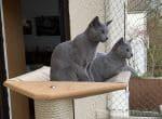 Luna & Balou, Leon